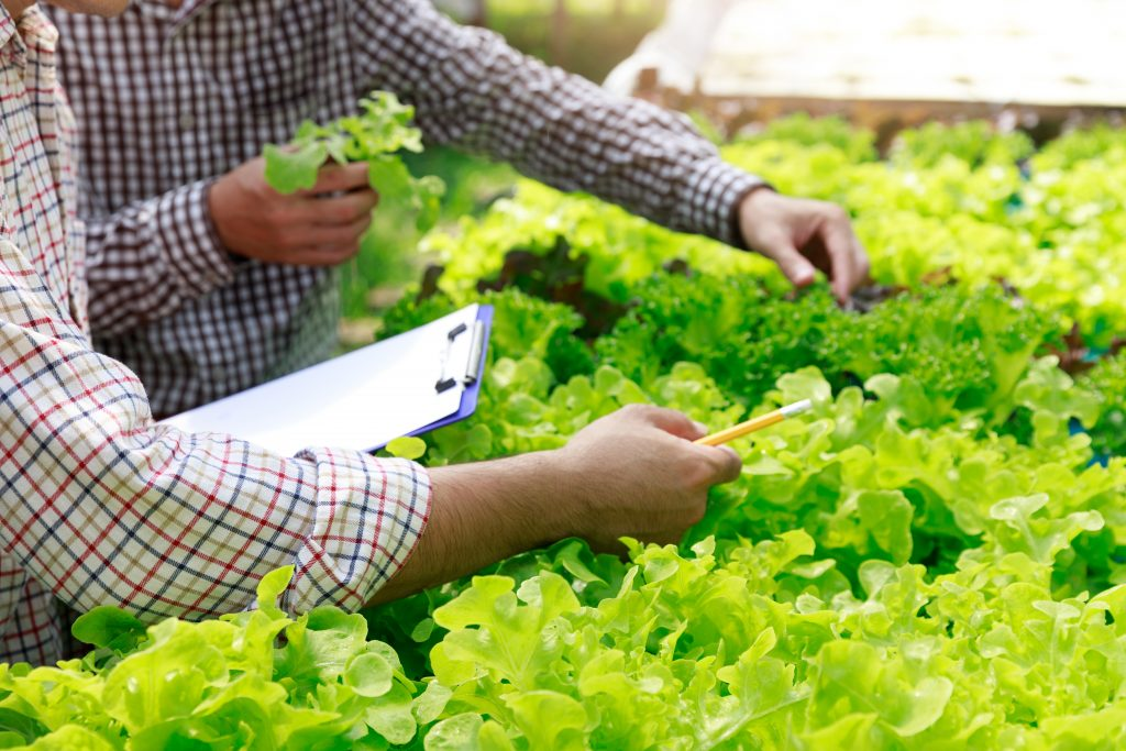 Trabajadores probando la calidad de sus hortalizas